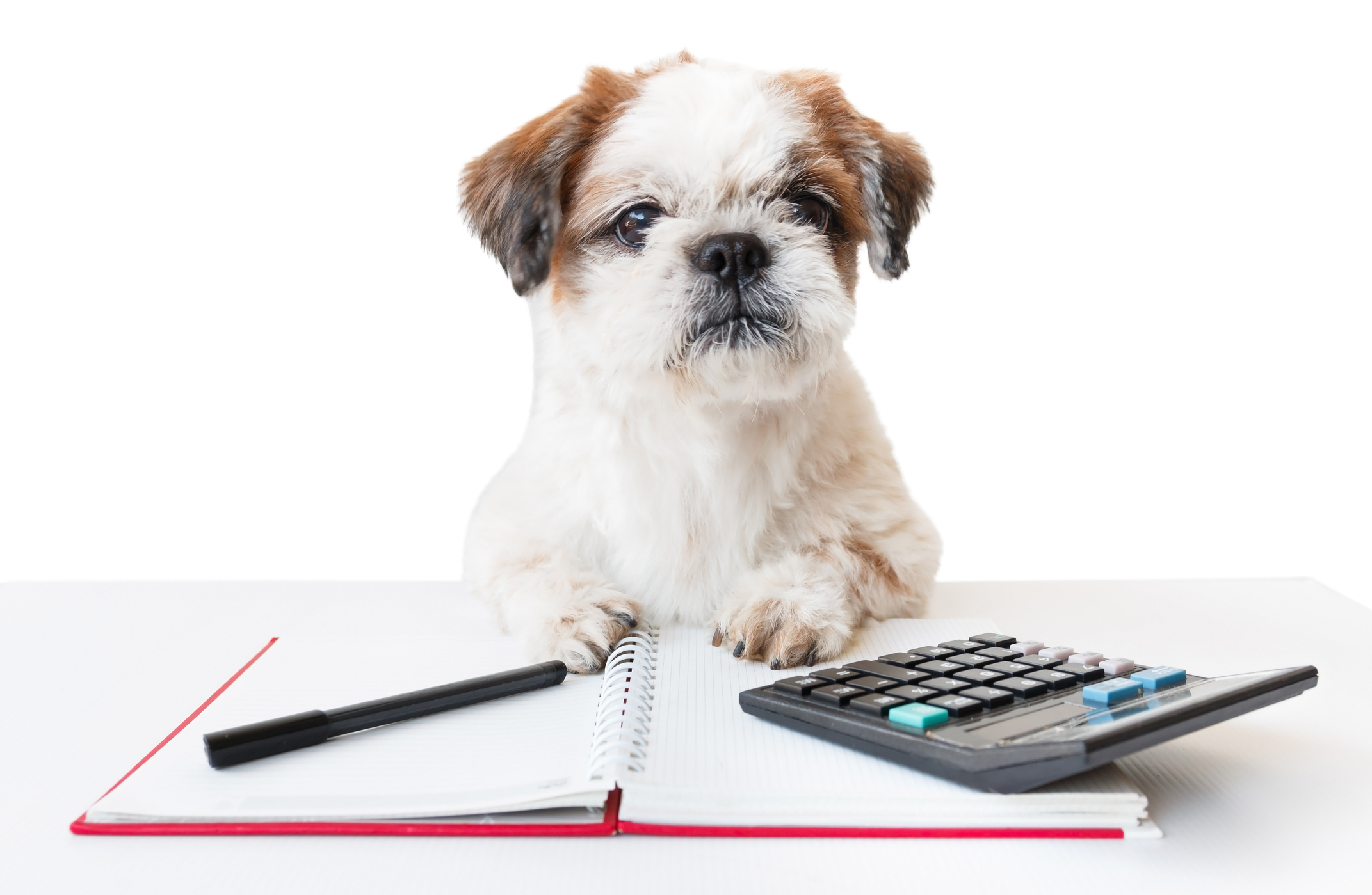 Image result for dog with calculator